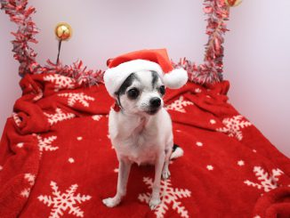 Christmas Dog Picture Cute Animals