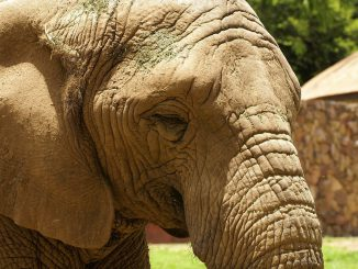 African Elephant Nature Africa