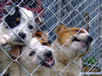 Dog Puppy Shelter Cute Puppies