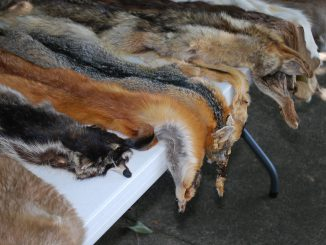 Animal Skins Wildlife Leather Fur