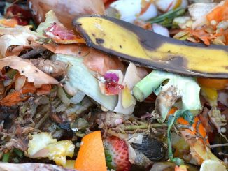 Compost Fruit And Vegetable Waste
