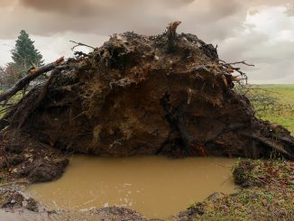 Tree Uprooted Storm Roots Rain