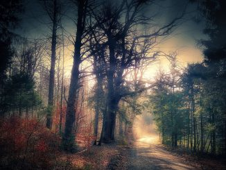 Mystical Forest Away Forest Path