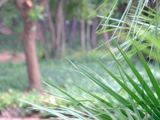Park Plants Leaves Foliage Palm  - Korbstuhl-am-Meer / Pixabay