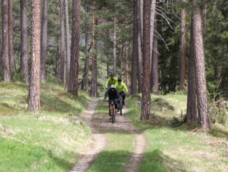 Bike Nature Forest Woods Outdoor  - lenahelfinger / Pixabay