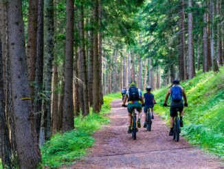 Forest Forest Road Mountain Bike  - MaBraS / Pixabay